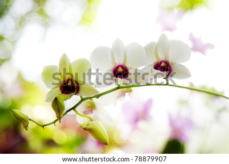 close-up photo of the nice orchid flower - stock photo
