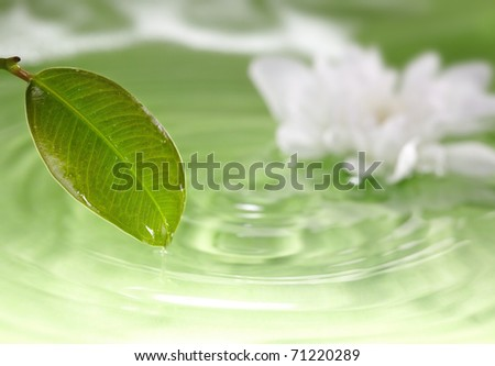 Close-up photo of the wet leaf on a green liquid background with white flower. Natural colors. Shallow depth of field added by macro lens for natural view - stock photo