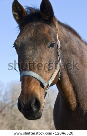 Close up photograph of a head of a horse