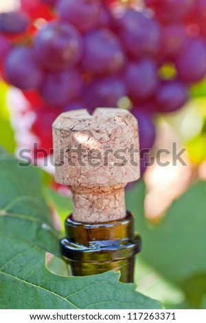 Close up photograph of a red wine bottle�¢??s cork - stock photo