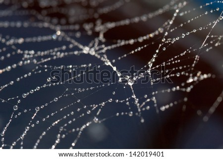 Close up photograph of spider web - stock photo