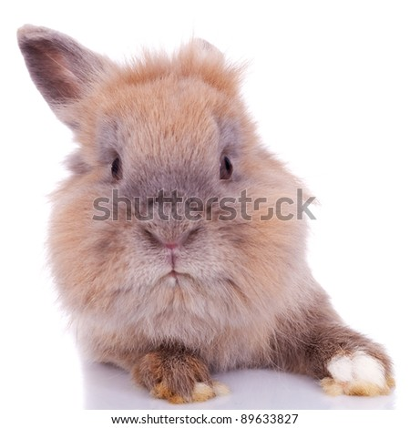 close up picture of a curious little brown rabbit on white background - stock photo