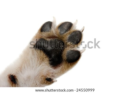 Close-up picture of dog paw - great footprints