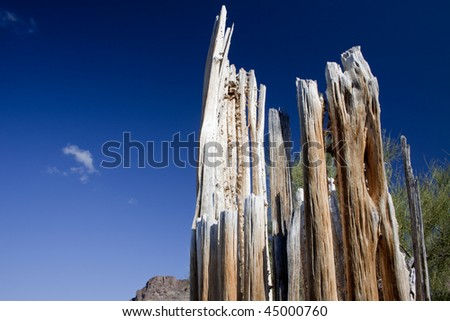 Close up picture of saguaro cactus ribs with sky - stock photo