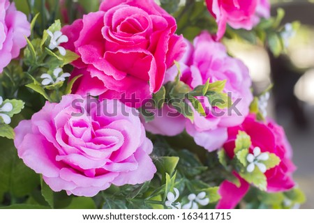 close-up pink and red Bouquet rose - stock photo