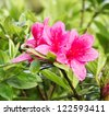 Close up pink flower in garden - stock photo