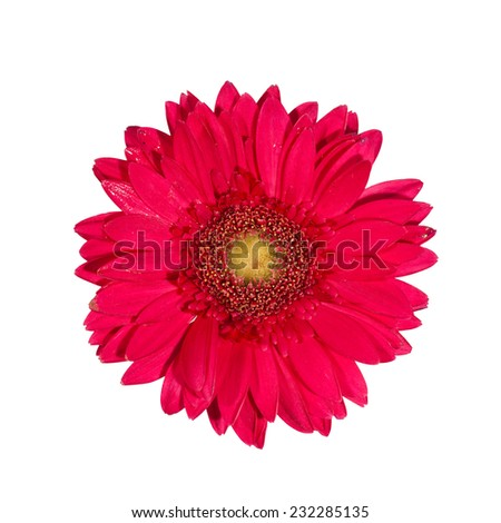 Close up Pink gerbera flowers isolated on white background - stock photo