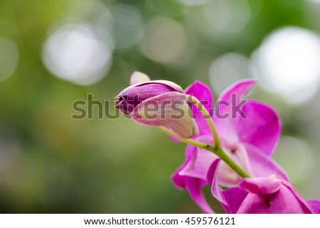 Close up pink orchid flower bud