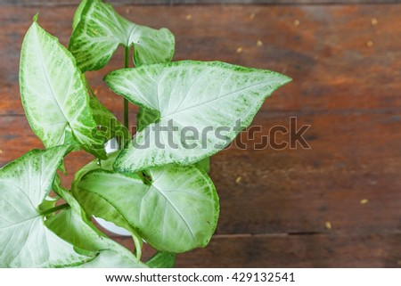 Close up plant in a small pot on the wooden table - stock photo