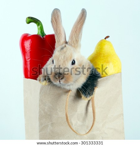 close-up portrait Bunny rabbit in a paper bag with vegetables and fruits on a white background studio - stock photo