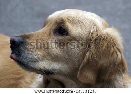 Close up portrait of a beautiful dog - stock photo