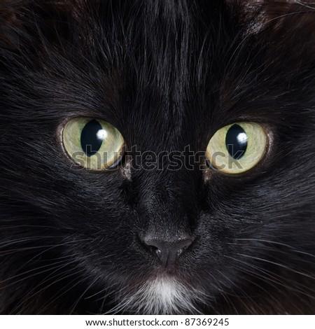 Close up portrait of a black kitten - stock photo