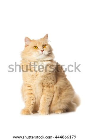close-up portrait of a funny red cat isolated on white background