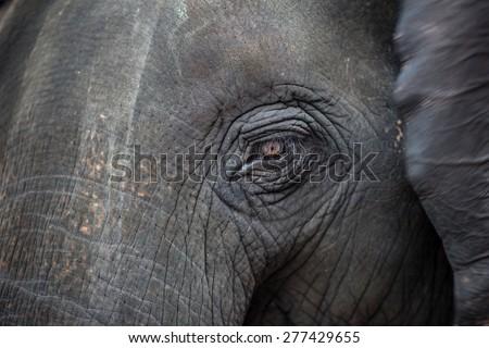 Close up portrait of an elephant - stock photo