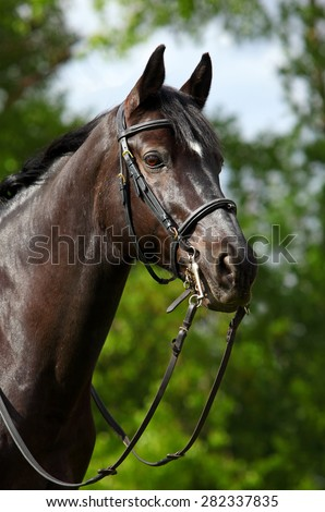 Close up portrait of beautiful brown horse - stock photo