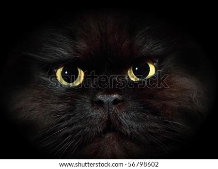 Close up portrait of black cat - stock photo