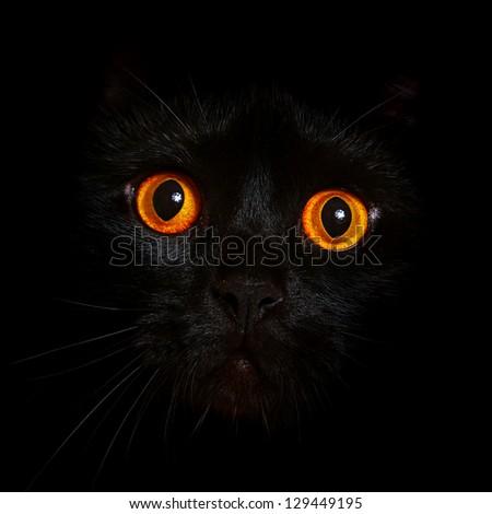 Close-up portrait of black cat with orange eyes - stock photo