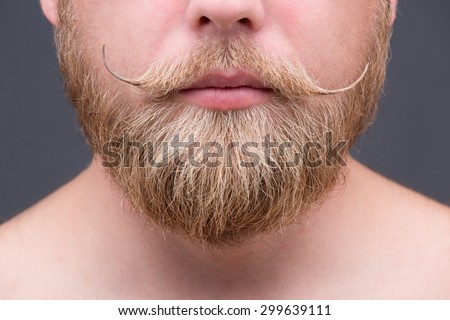 Close-up portrait of blond beard of a man. Serious mature man showing his fashionable beard on grey background. - stock photo
