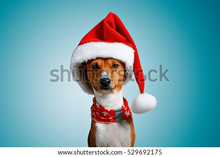 Close up portrait of funny beautiful dog wearing christmas santa hat and red festive collar with stars looking on camera, isolated on cool blue background