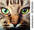 Close-up portrait of tabby cat - stock photo
