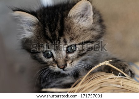 Close-up portrait of tabby house cat