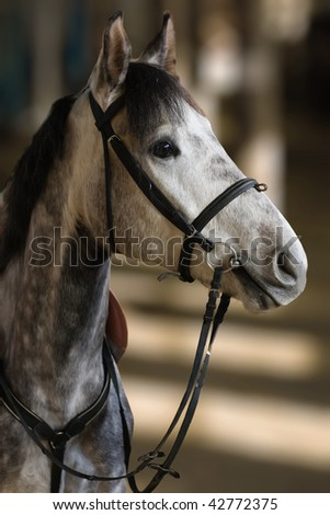 Close up portrait racing horse on fuzzy background - stock photo