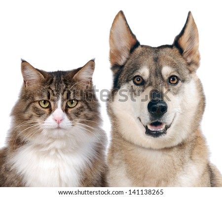 Close up portraits of dog and cat in front on white isolated background - stock photo