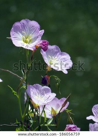Close Up Purple Flowers - stock photo