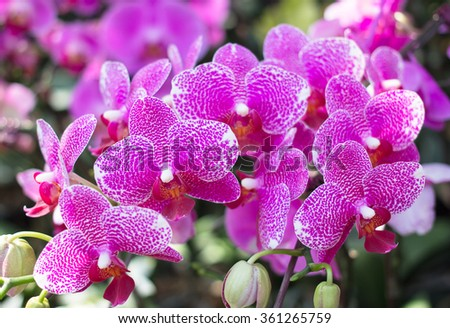 Close up Purple Orchid blur background