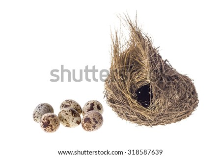 Close up quail eggs and nest isolated on white background - stock photo