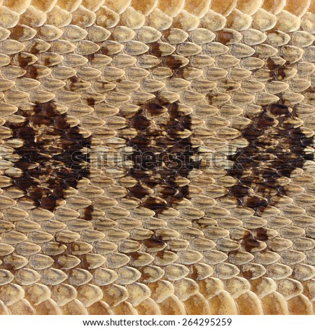 close-up rattlesnake skin - stock photo