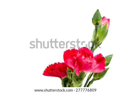 Close up Red carnation in vase isolated on white background - stock photo
