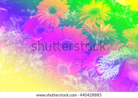 Close up red gerbera flower in the garden with color filters - stock photo
