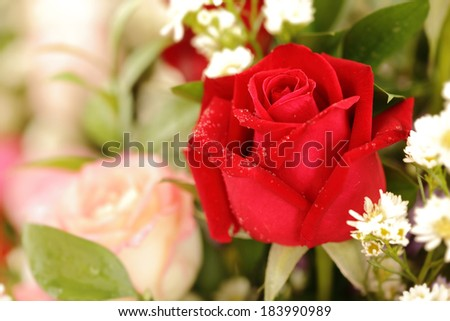 Close up red rose decoration - stock photo