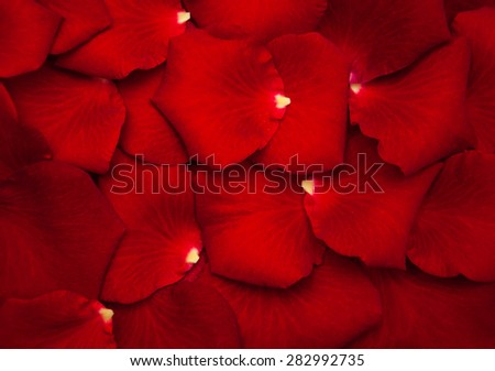 Close up - Red rose petals - natural background - stock photo