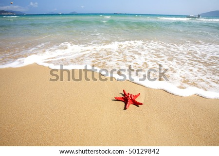 close up red starfish on beach - stock photo