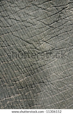 close up rough texture of an elephant's body - stock photo