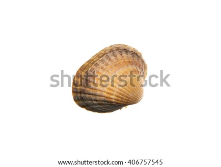 Close up scallop shell isolated over white background - stock photo