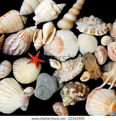 Close-up seashells on black background - stock photo
