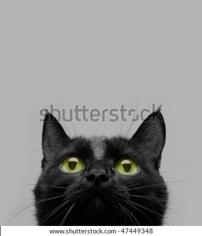 close-up shot of a black cat with green eyes - stock photo