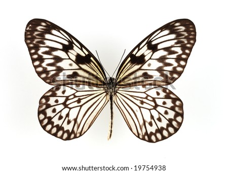 Close-up shot of a butterfly isolated on white background