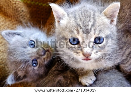 Close up shot of a couple of small kittens - stock photo