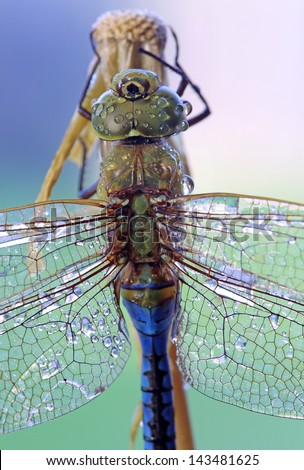 Close-up shot of a dragonfly with dew drops - stock photo