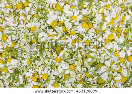 Close-up shot of a heap of chamomile flowers