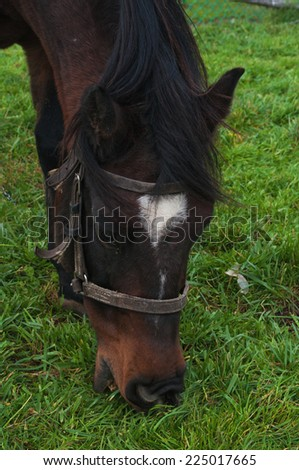 Close up shot of a horse grazing  - stock photo
