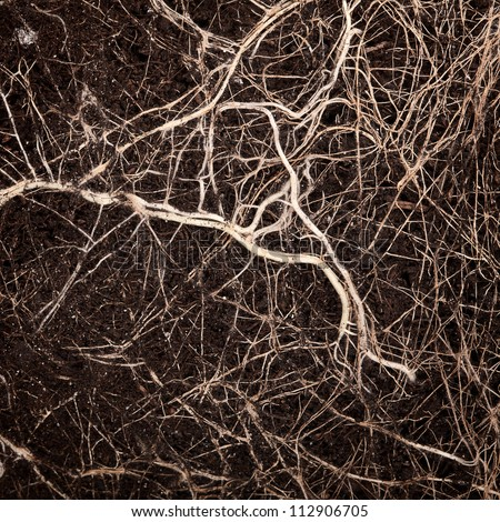 Close up shot of a roots in soil - stock photo