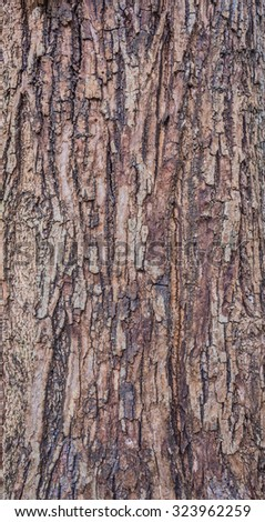 Close up shot of brown tree bark for background texture. - stock photo