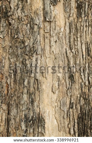 Close up shot of brown tree bark for background texture.