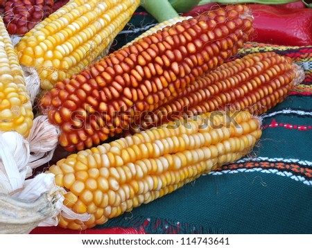 Close up shot of different colored corns over the table Fertility feast in Kyustendil, Bulgaria