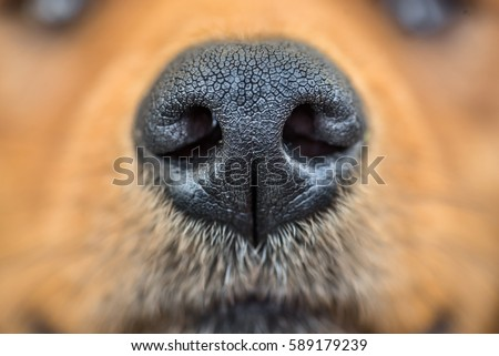 Nose Stock Images Royalty Free Images Amp Vectors